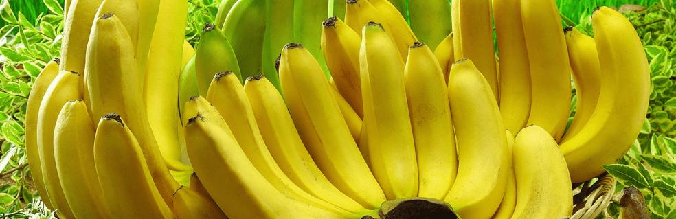 dietetyczna żywność - banany