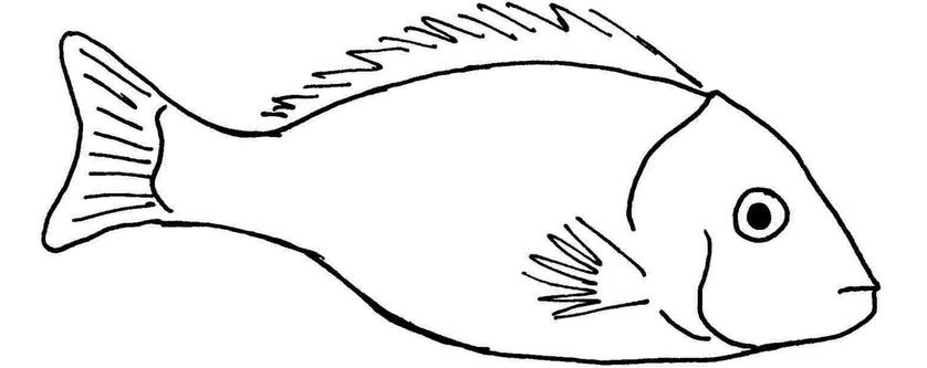 Ryba i świąteczne przepisy - śledź